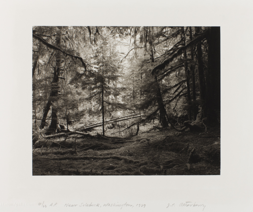 J.P.%20Atterberry%2C%20%3Cb%3E%3Ci%3E%20Near%20Sol%20Duc%2C%20Washington%3C%2Fi%3E%3C%2Fb%3E%2C%201989%2C%20platinum%2Fpalladium%20print%2C%20Bequest%20of%20Fae%20Heath%20Batten%2C%20%26%23169%3B%20J.P.%20Atterberry%2C%201997.188.14