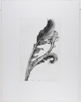 Sarah%20Horowitz%2C%20%3Cb%3E%3Ci%3E%20Cynara%20I%3C%2Fi%3E%3C%2Fb%3E%2C%202005%2C%20etching%20on%20paper%2C%20Museum%20Purchase%3A%20Jean%20Y.%20Roth%20Memorial%20Fund%2C%20%26%23169%3B%20Sarah%20Horowitz%2C%202010.67.5